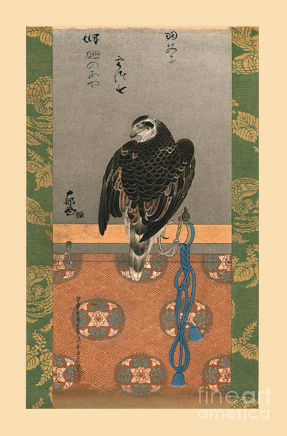 Falcon Drawing by Print Collector