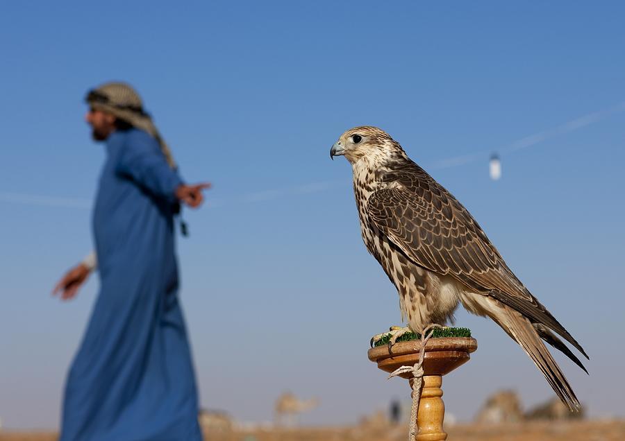 Falconery In Sakakah, Saudi Arabia On Photograph by Eric Lafforgue