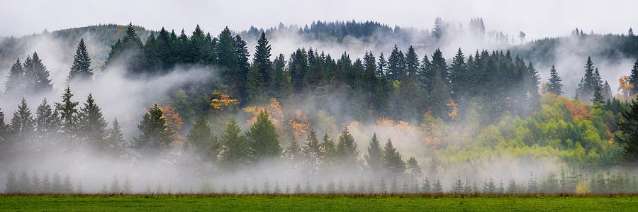 Fall and Fog in Washington State by Michael Ash
