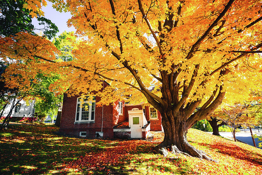 Fall at Goss Reading Room by Robert Clifford