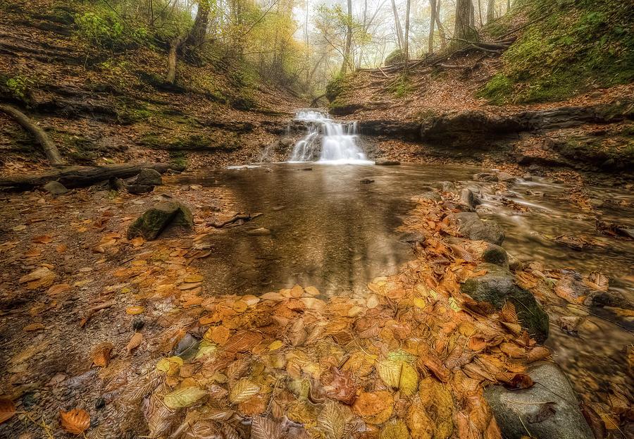 Fall at Parfrey's Glen by Brad Bellisle