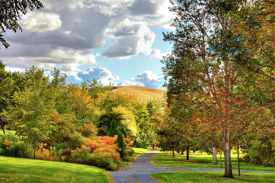 Fall at the Arboretum by David Patterson