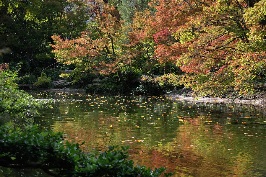 Fall at the Japanese Garden by Ricardo J Ruiz de Porras