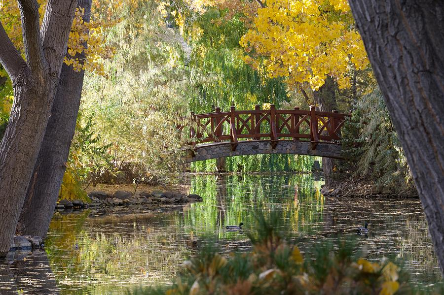 Fall at the Swan Pond by Vinnie Oakes