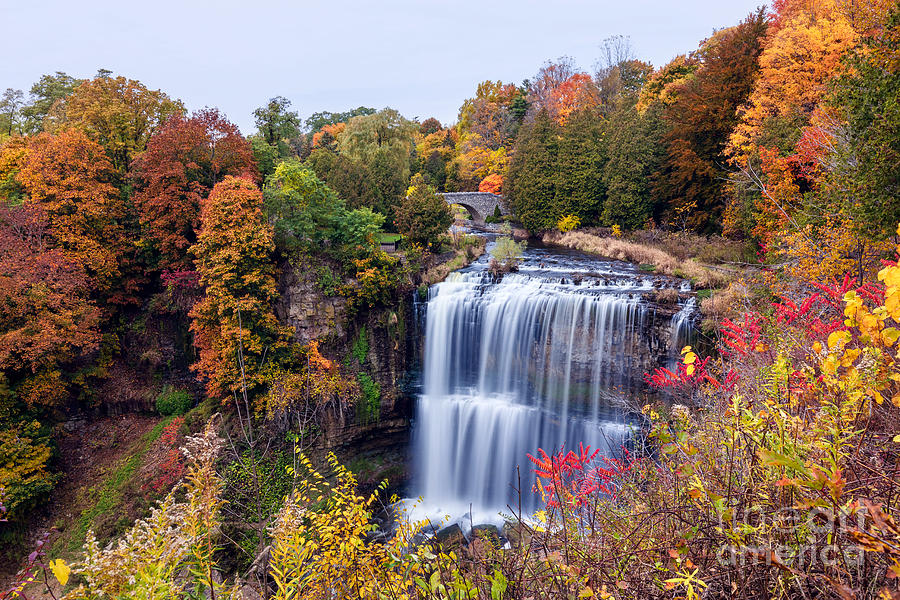 Fall at Webster's Falls by Alma Danison