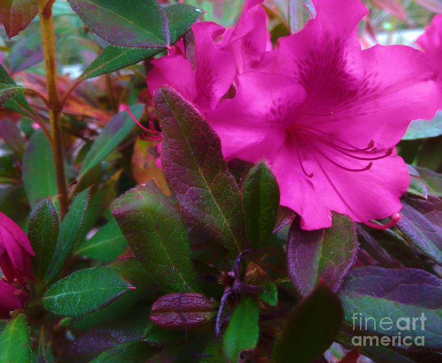 Flower Photograph - Fall Beauty by Robert Knight