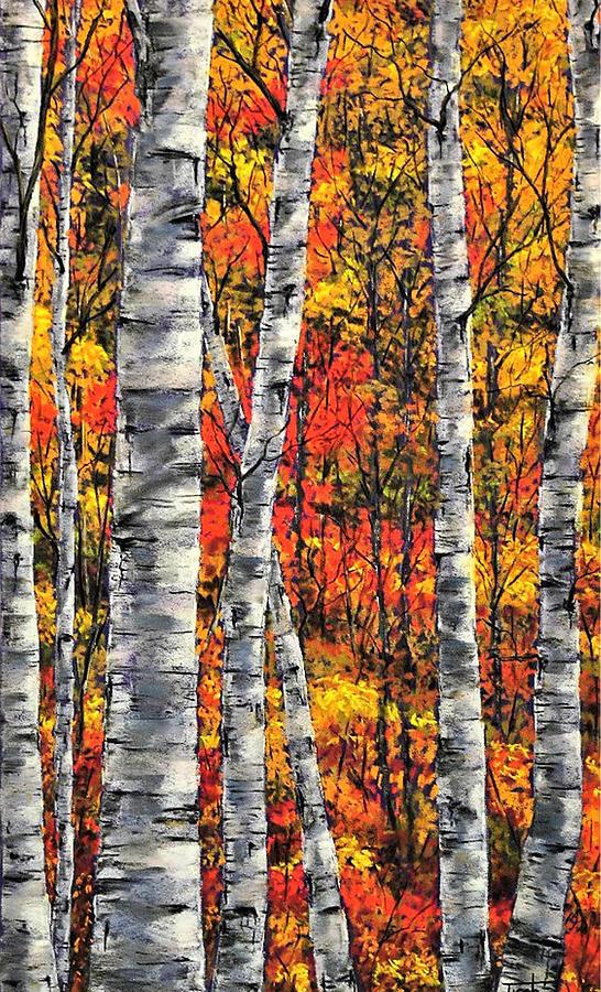 Fall Birch Grove by Lee Tisch Bialczak