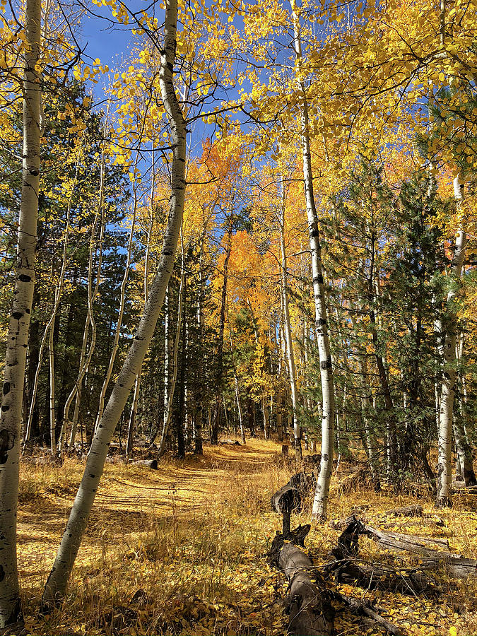 Fall Color in the Arizona High Country by TL Wilson Photography by Teresa Wilson