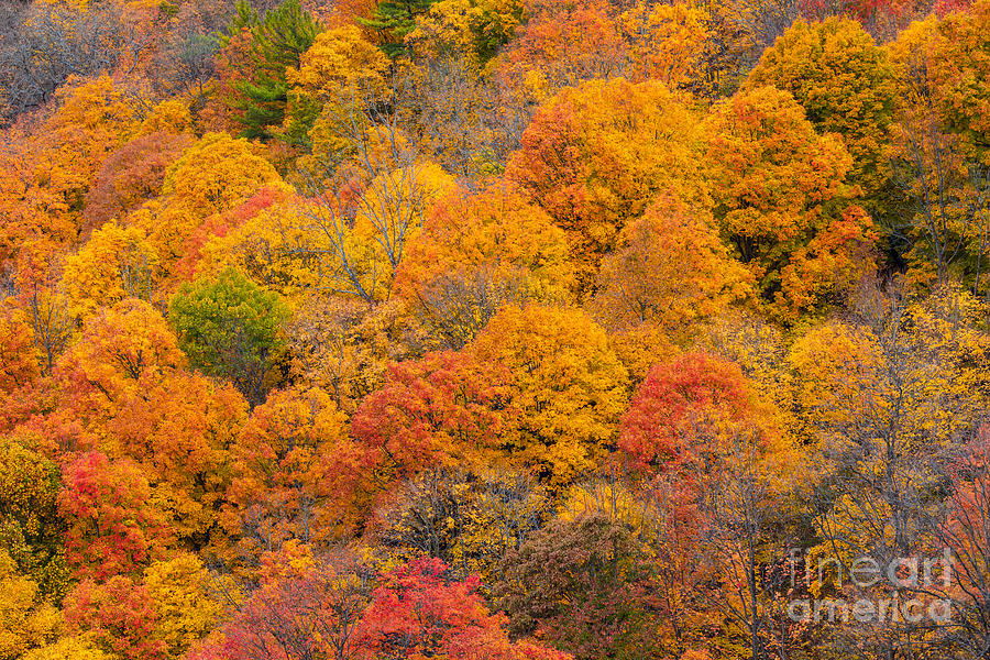Fall Colors by Alma Danison