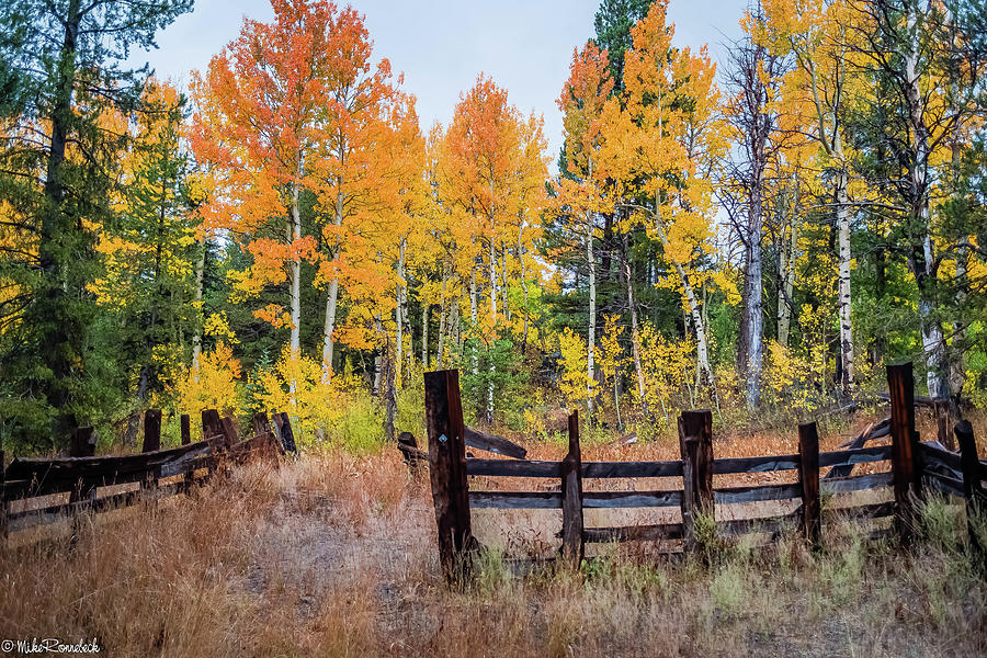 Fall Colors by Mike Ronnebeck