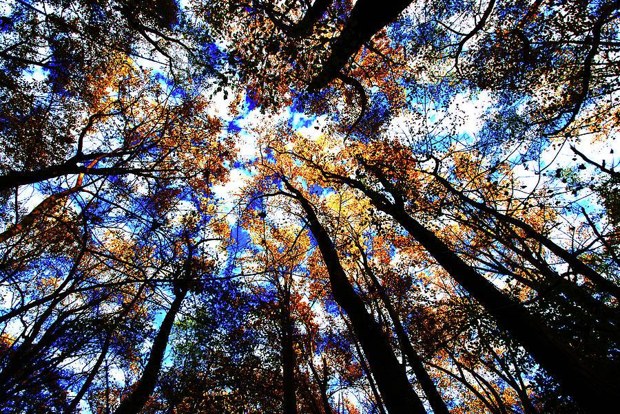 Fall colors, Potomac Overlook Park by Bill Jonscher