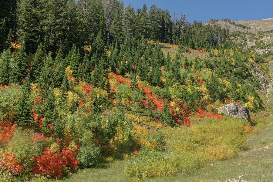 Fall Colors by Ronnie and Frances Howard