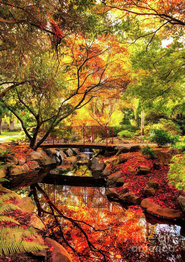 Fall Colors in the Park by Sue Harper