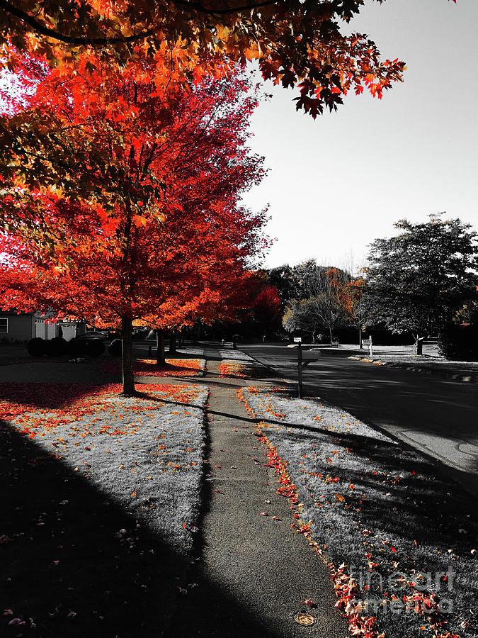 Fiery Fall Trees, Part 1 Photograph by JMerrickMedia