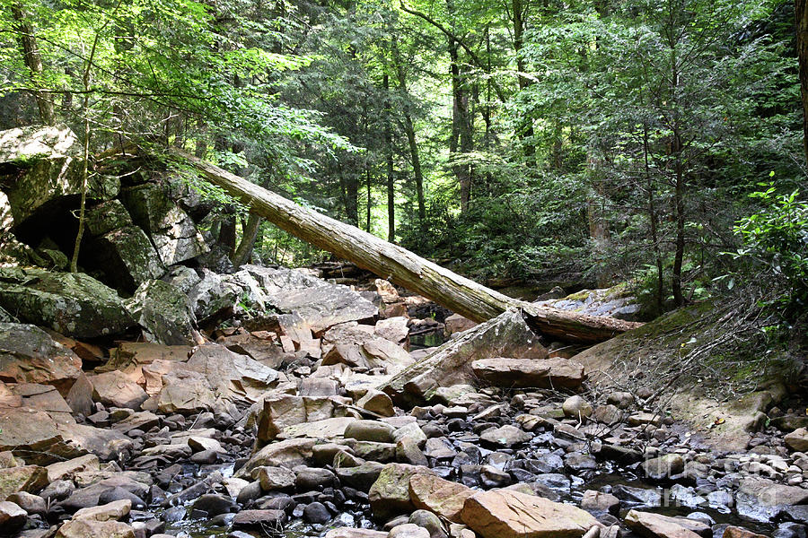 Fall Creek 1 by Phil Perkins