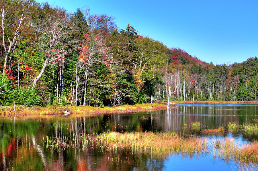 Fall Day at Fly Pond by David Patterson