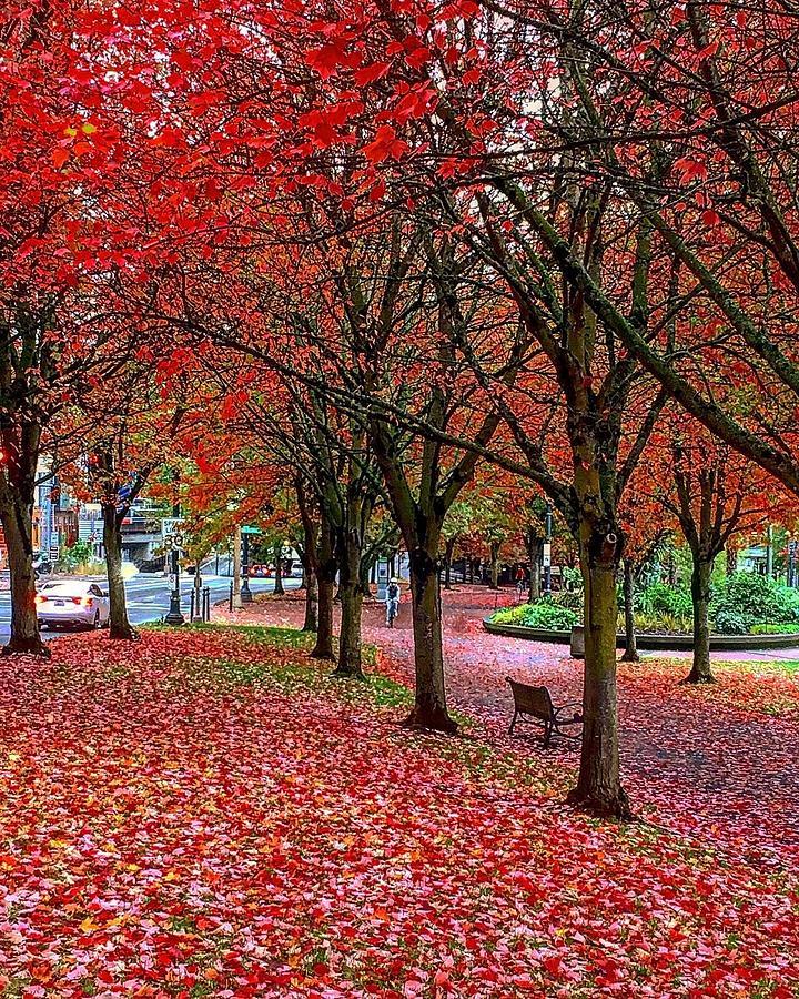 Fall Fantasy in Portlandia by Michael Oceanofwisdom Bidwell