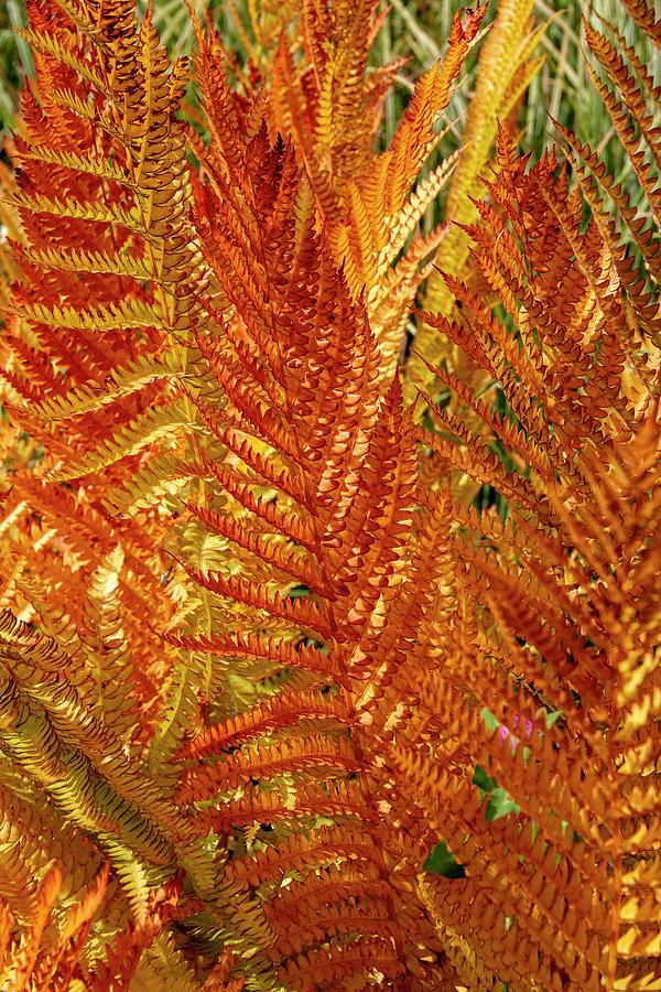Fall Ferns  by Betty Pauwels