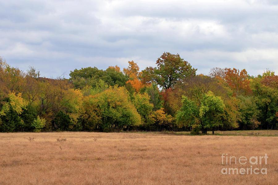 Fall Field Photograph