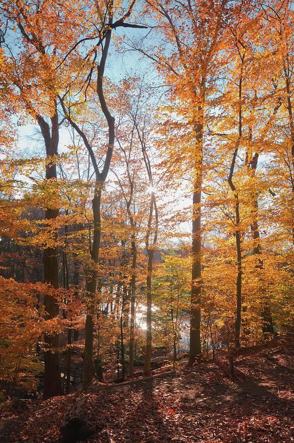 Fall Filter by David Lamb