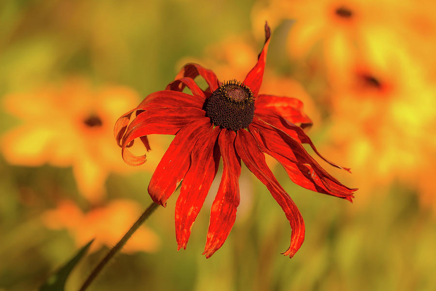 Fall Flower by Dorothy Cunningham