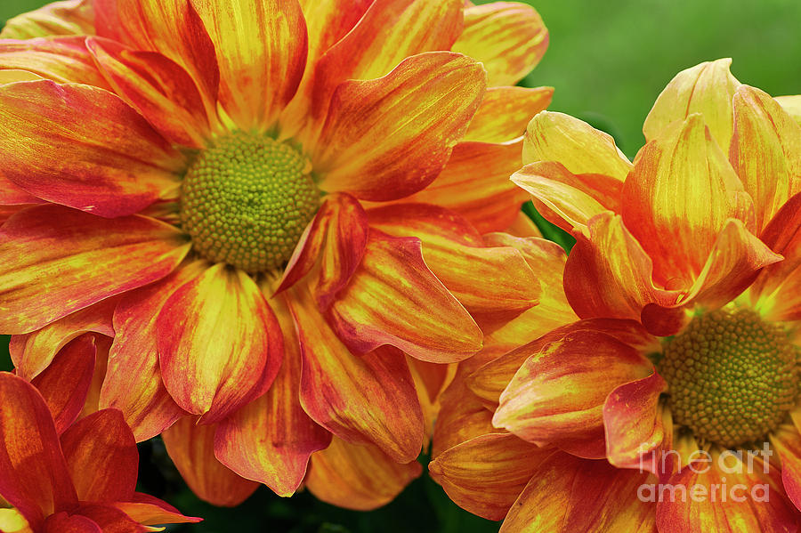 Fall Flowers by Steve Ondrus