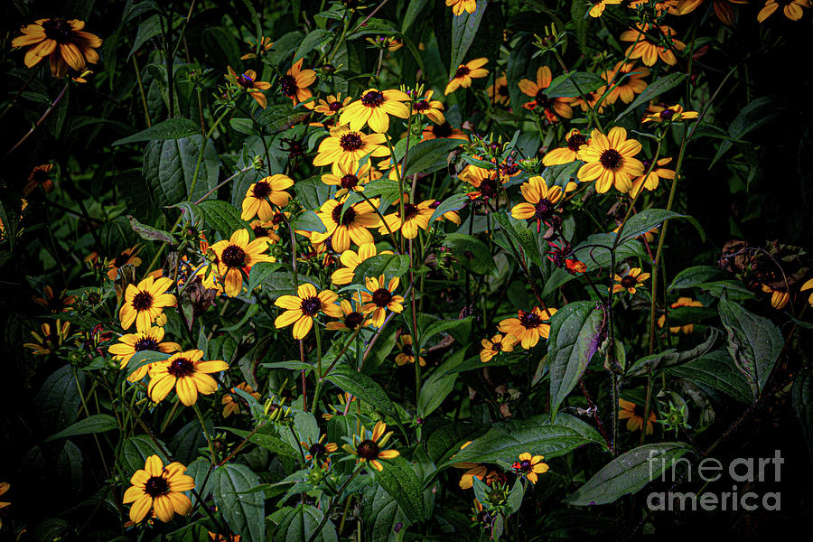 Fall Flowers by William Norton