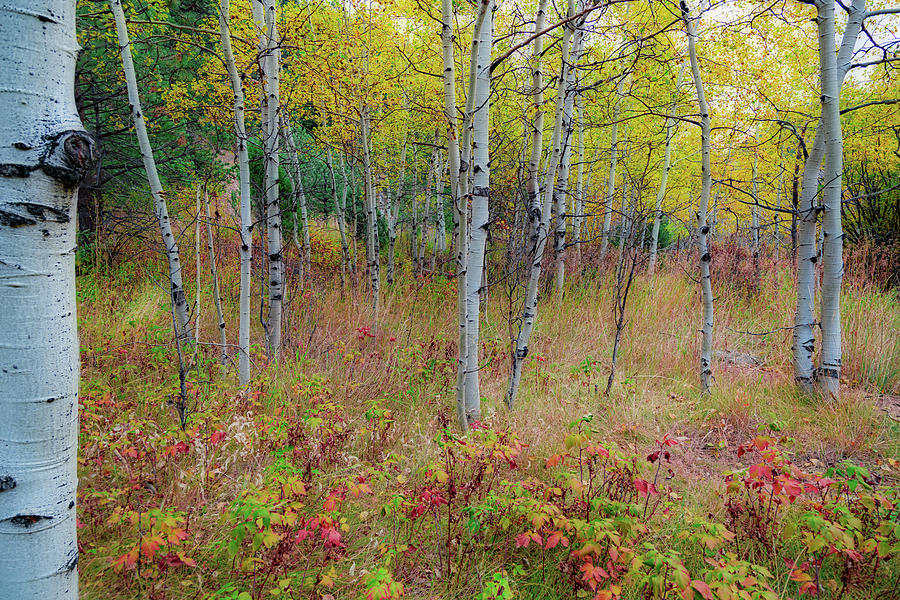 Fall Foliage Forest Delight Landscape by James BO Insogna