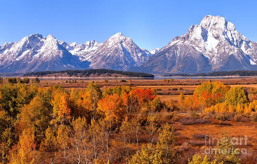 Fall Foliage Under Mt. Moran by Adam Jewell