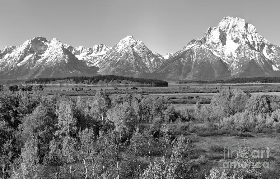 Fall Foliage Under Mt. Moran Black And White by Adam Jewell