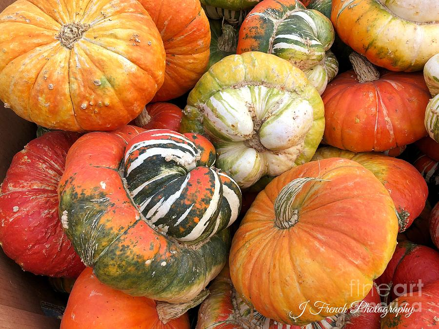 Fall Harvest by Jeanette French