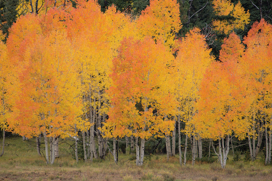 Fall has Arrived by Michael Monahan