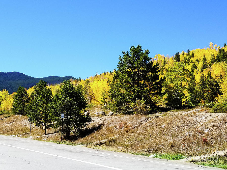 Fall in Colorado by Elizabeth M