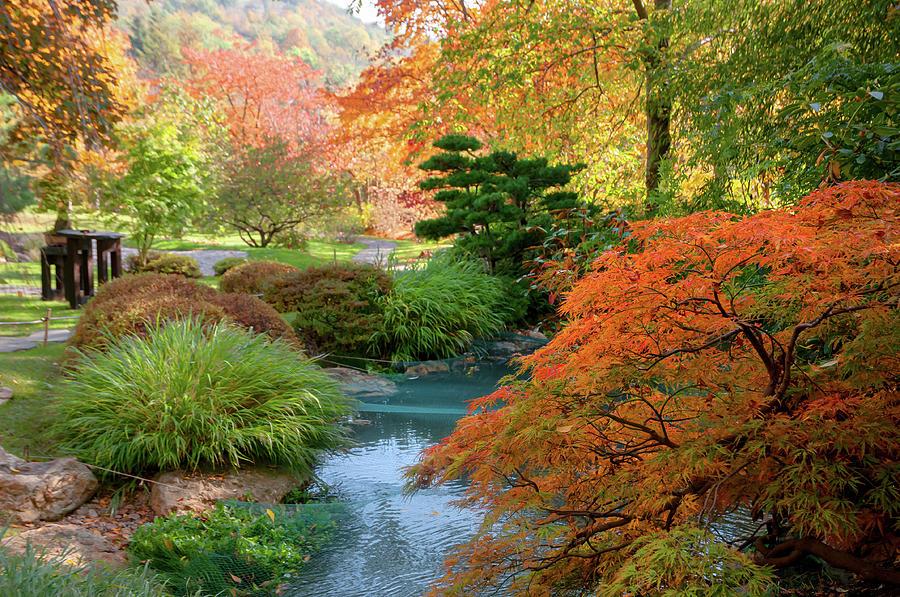 Fall in Japanese Garden 2 by Jenny Rainbow