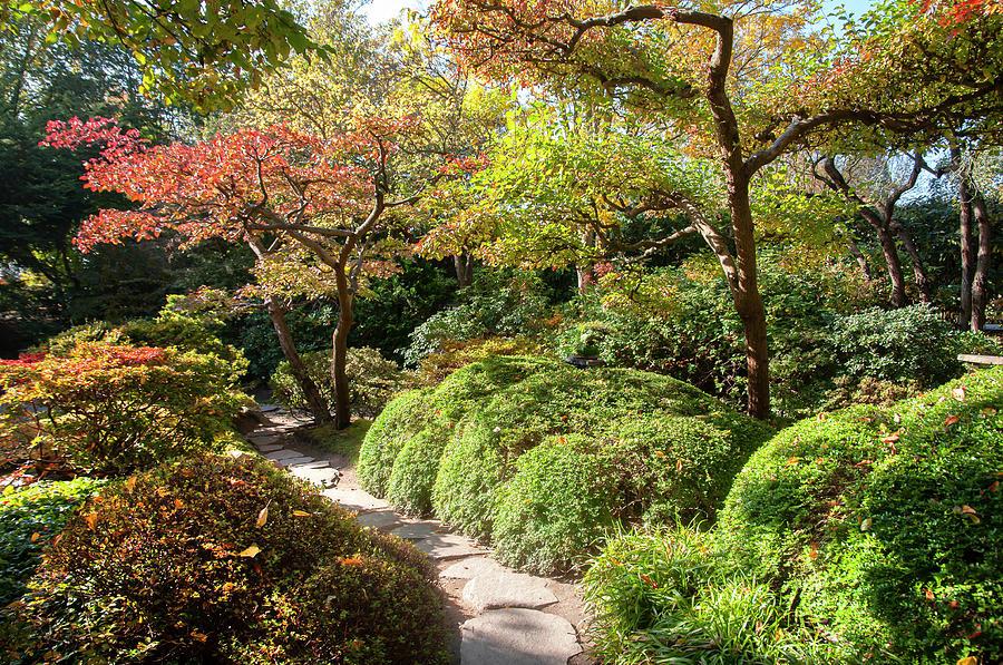 Fall in Japanese Garden 4 by Jenny Rainbow