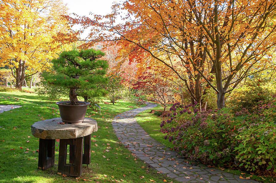 Fall in Japanese Garden by Jenny Rainbow