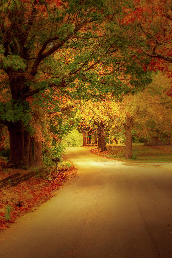 Fall in Nixa, Missouri by Allin Sorenson