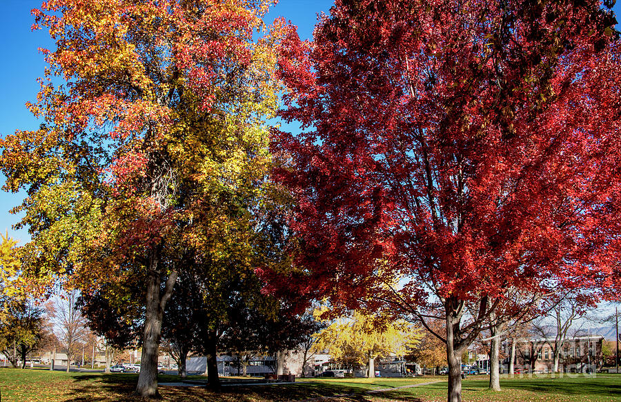 Prints Photograph - Fall In Wenatchee by Mae Wertz