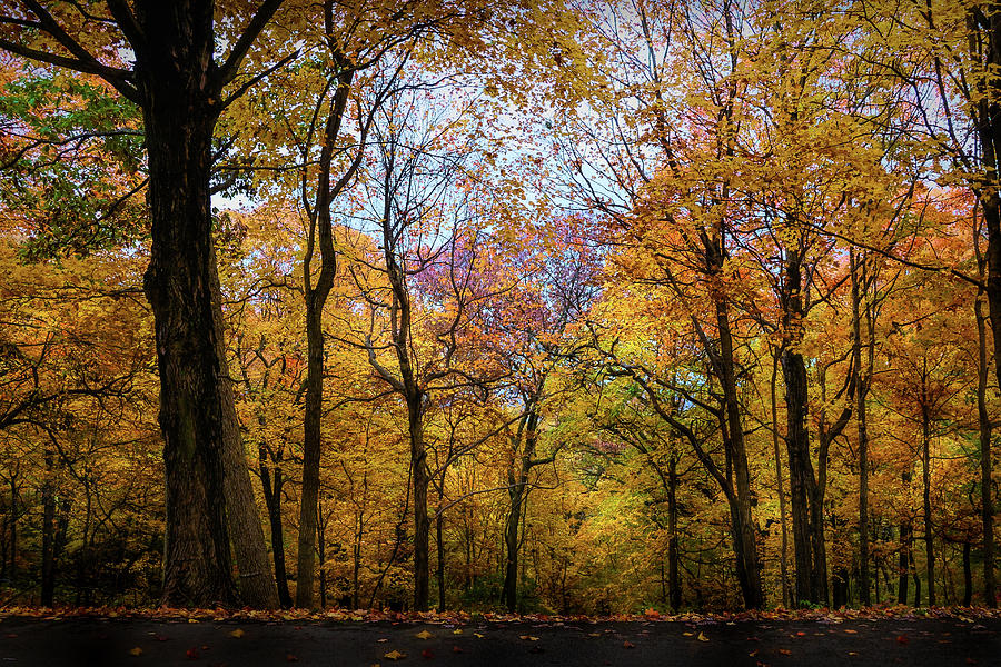 Fall Landscape Pere Marquette by Mary Lynn Giacomini