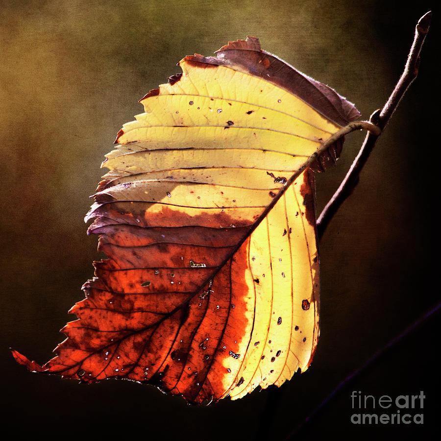 Fall Leaf by Pam  Holdsworth