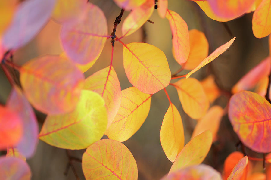 Fall Photograph - Fall Leaves 002 by Tom Quartermaine
