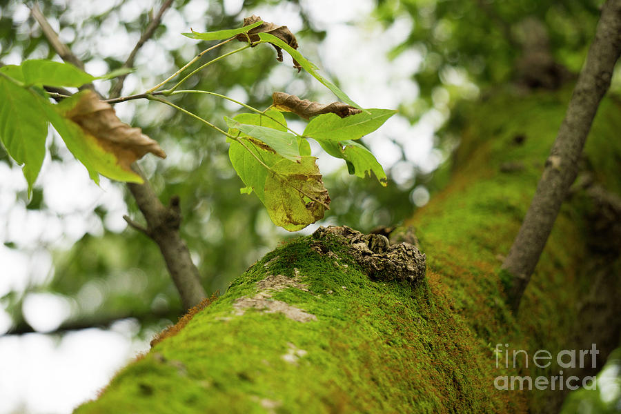 Fall Leaves and Moss by Randall Saltys