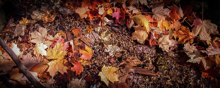 Fall Leaves by Ann Lauwers