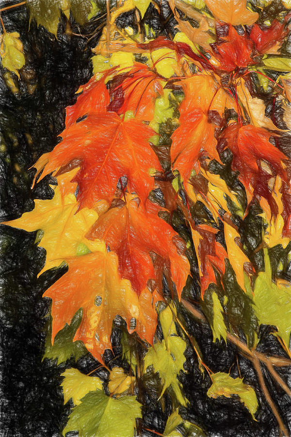 Fall Leaves in the Sun by Peggy Blackwell