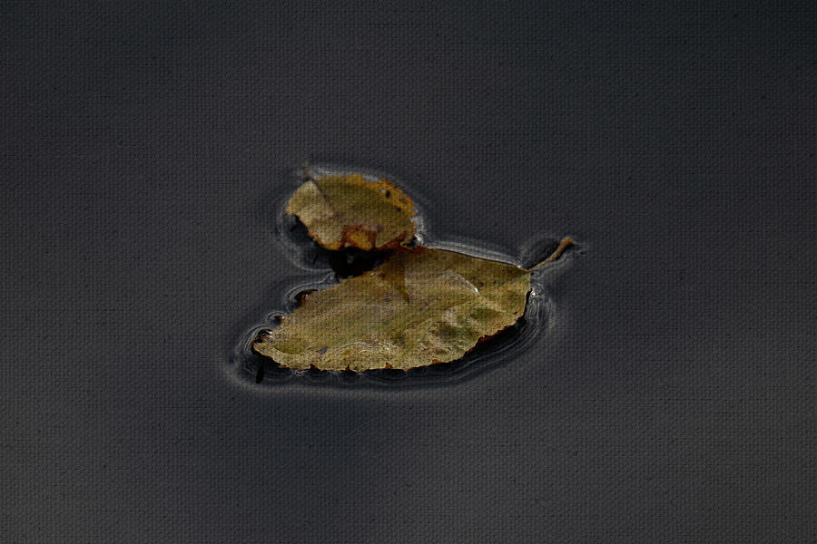 Fall leaves in water 8 by Lauri Novak