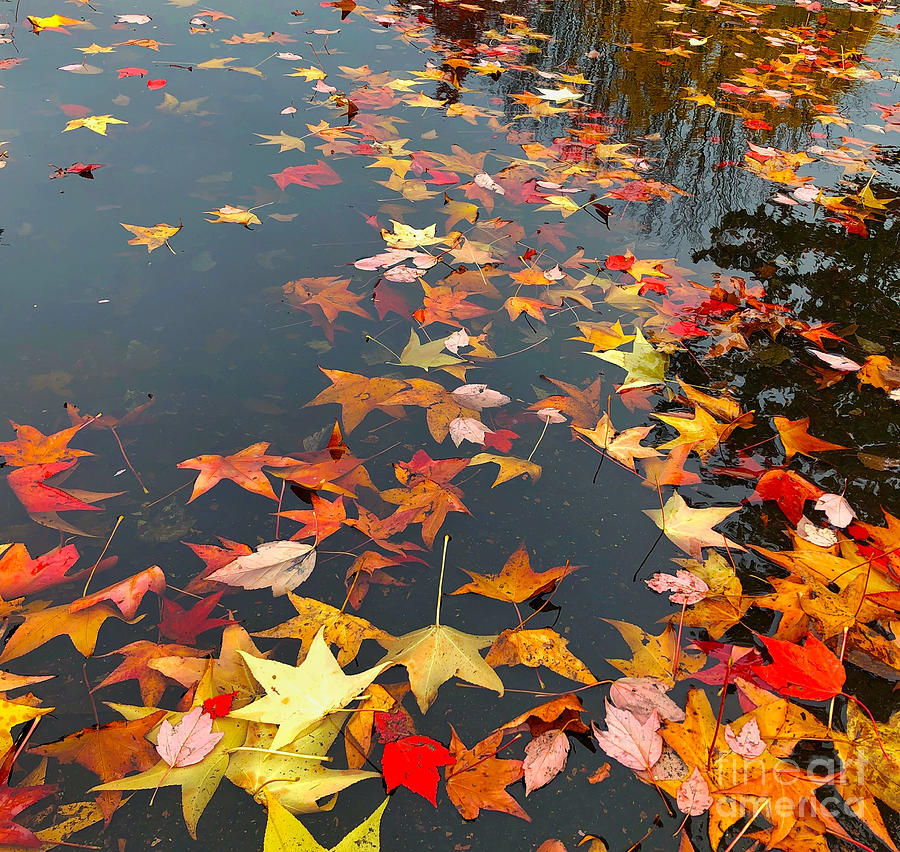 Fall Leaves by Jeanette French