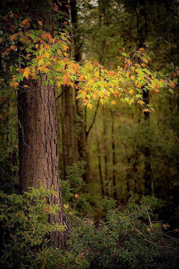 Fall Leaves by Karen Rispin