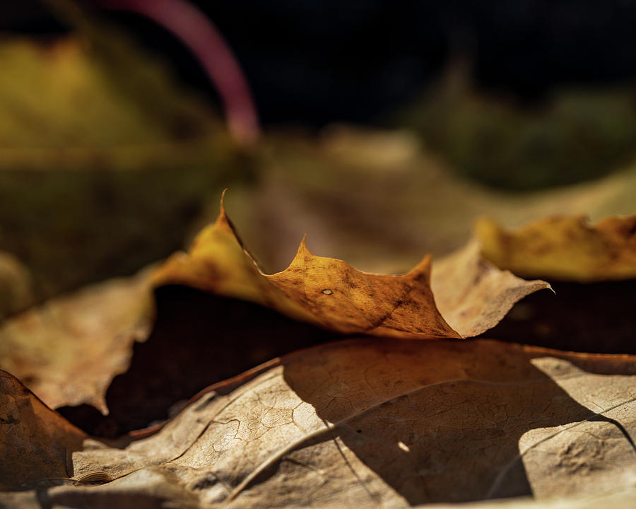 Fall Leaves Nature Photography by Amelia Pearn