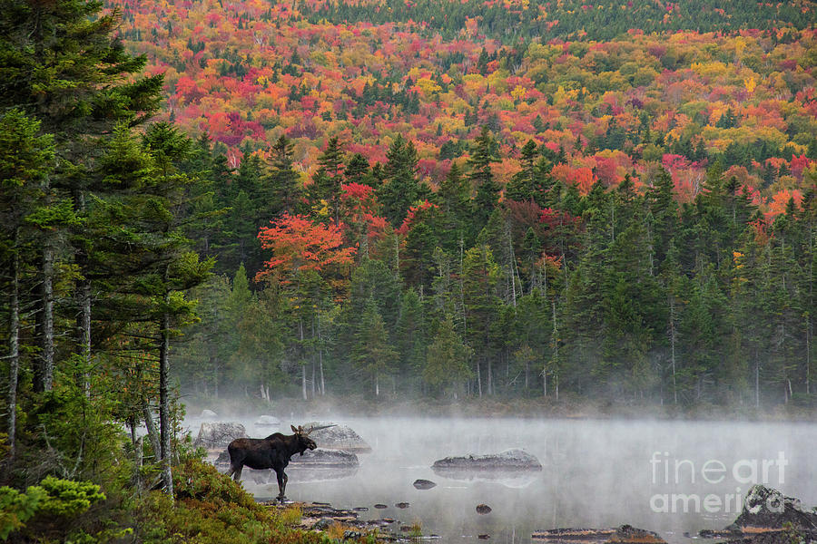 Fall Morning on the Pond by Jane Axman