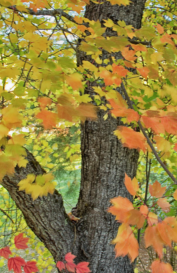 Fall Moves Me by Tom Kelly